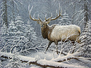 Elk Horns Painting Framed Prints - Winter Coat Framed Print by Mike Stinnett