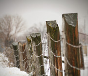 Lines Art - Winter fence by Sandra Cunningham
