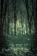 Gloomy Prints - Winter forest at twilight Print by Sandra Cunningham