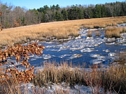 Leaves - Winter On The River by Lynn-Marie Gildersleeve
