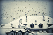 Silvia Ganora - Winter roofs