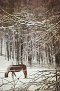 Grazing Art - Winter scene with horse grazing in wooded pasture by Sandra Cunningham
