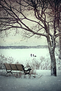 Bleak Framed Prints - Winter scene with with bench and tree Framed Print by Sandra Cunningham