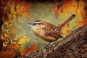 Orange Leaves Framed Prints - Wren in Autumn  Framed Print by Bonnie Barry