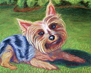 Pet Rescue By Judy Pastels Prints - Yard Yorkie Print by D Renee Wilson