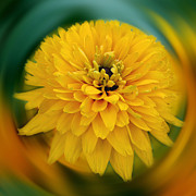 Yellow Delight Fine Art Print by Smilin Eyes Treasures