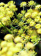 Yellow Flowers Photos - Yellow Flowers by Gilbert Artiaga