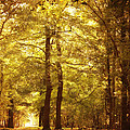 HJBH Photography - Autumn in the forest