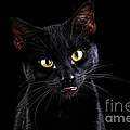 Mark Johnson - Black Cat