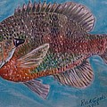 Richard Goohs - Bluegill Sunfish