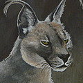 Margaret Saheed - Caracal Cat