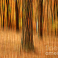 Darren Fisher - Colors of Autumn