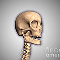 Conceptual Image Of Human Skull by Stocktrek Images
