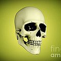 Conceptual View Of Human Skull by Stocktrek Images