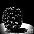 Walt Foegelle - Pine Cone Light Painting