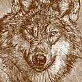 J McCombie - Portrait of a Gray Wolf