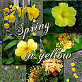Larry Bishop - Spring in Yellow