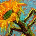 Tim  Swagerle - Sunflower