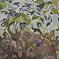 Francois Fournier - The Wild Columbines