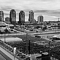 urban farm on unused lot at concord pacific place at false creek Vancouver BC Canada by Joe Fox