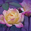 Richard Cummings - Vintage Miniature Rose