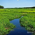 Annie Zeno - Cape Cod Salt Marsh