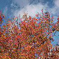 Luv Photography - Colors Of Autumn