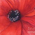 Mahsa Watercolor Artist - Red poppy flower