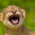 Ashley Vincent - Roaring Practice