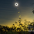 Solar Eclipse Composite, Queensland by Philip Hart