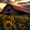Debra and Dave Vanderlaan - Sunflower Farm