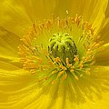 Chris Anderson - Yellow Macro