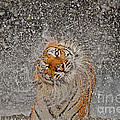 Ashley Vincent - 2012 Nat Geo Photo...