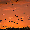Sally Weigand - Birds at Sunset
