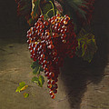 A Bunch Of Grapes by Andrew John Henry Way