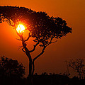 Robert Ford - A Memorable Savanna...