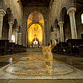 William Chizek - A Religious Cat