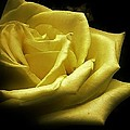 Bruce Bley - A Rose for You