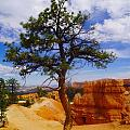 Jeff  Swan - A sole tree in Bryce...
