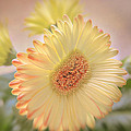 A Touch Of Sunshine by Fiona Messenger