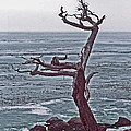ImagesAsArt Photos And Graphics - A Tree Shaped By Coastal...