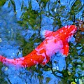 Amy Vangsgard - Abstract Koi 4