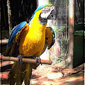 Ella Kaye - Adopted Macaw - Rescued...