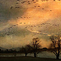 And They Flew Away by Kathy Jennings