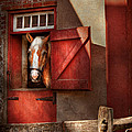 Animal - Horse - Calvins House  by Mike Savad