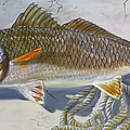 Phyllis Beiser - Another Redfish In The...