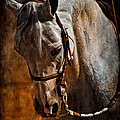 Jak of Arts Photography - Arabian 01