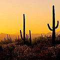 Ellen and Udo Klinkel - Arizona Sunset
