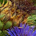 Michael Hoard - Artichoke And Blossom