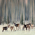 Priska Wettstein - Caribou and trees
